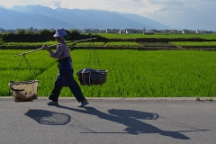 A Farmer's Shadow